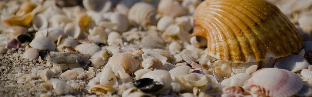Seashells on the sand for National Seashell Day On Fort Myers Beach