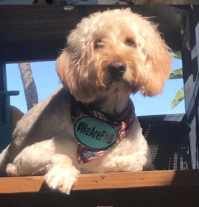 A dog show he's Fort Myers Beach proud with his #wearefmb bandana.